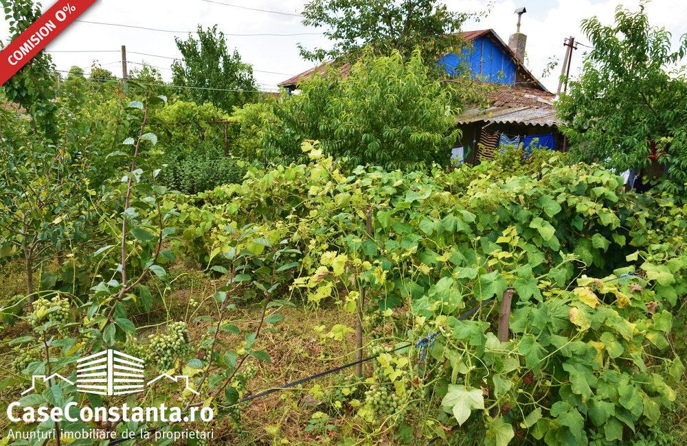 casa-chirnogeni-strada-asfalata-pret-minim7
